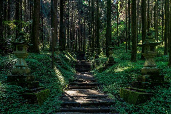 Forêt japonaise